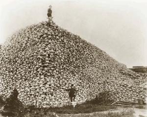Bison_skull_pile,_ca1870